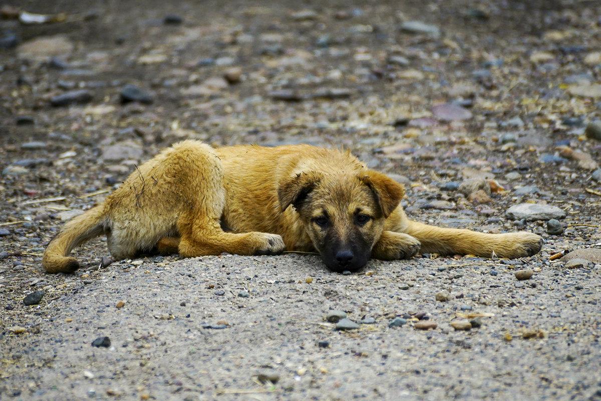 Уличный пес - Игорь Сикорский