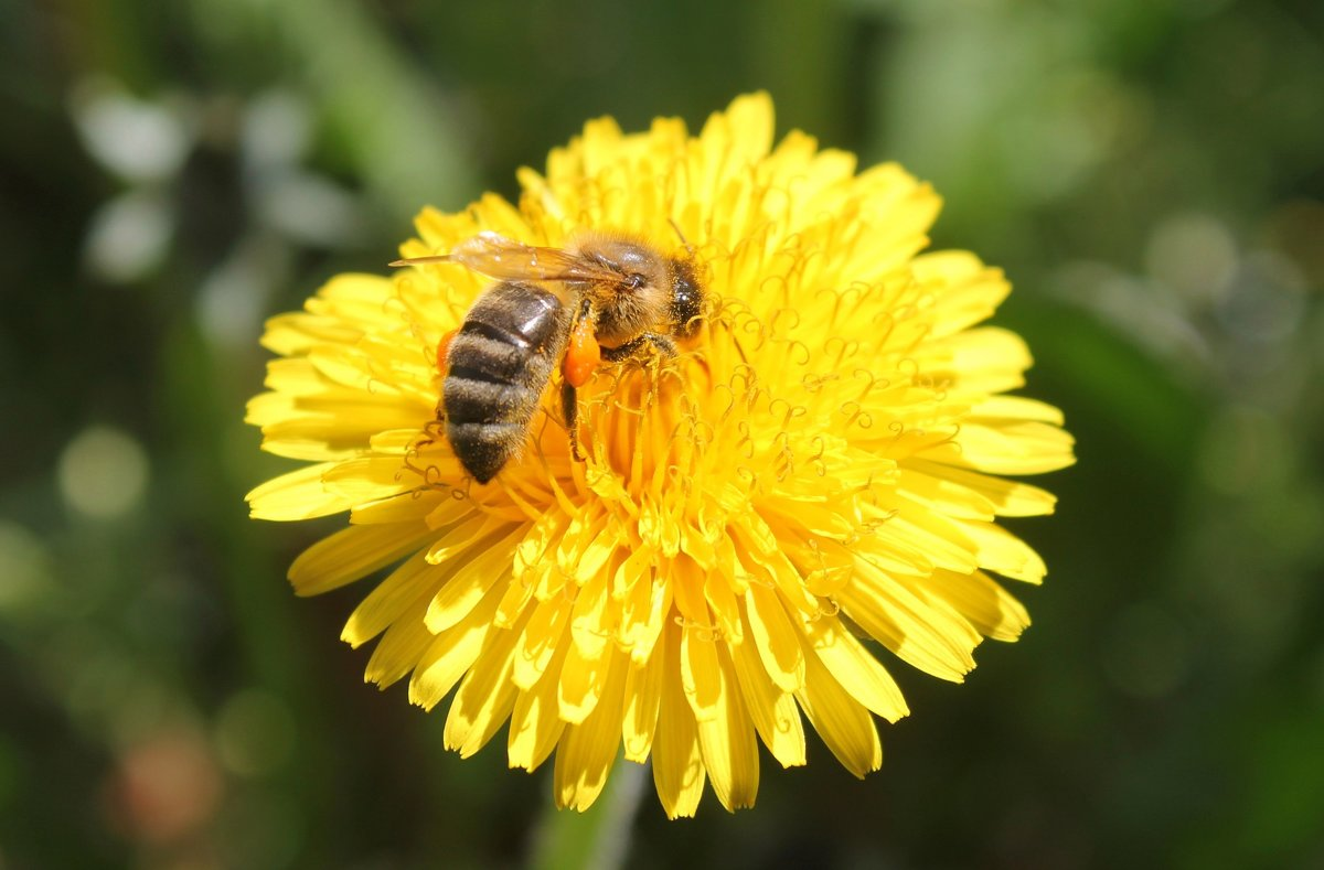 Пчёлка - Александр Довгий