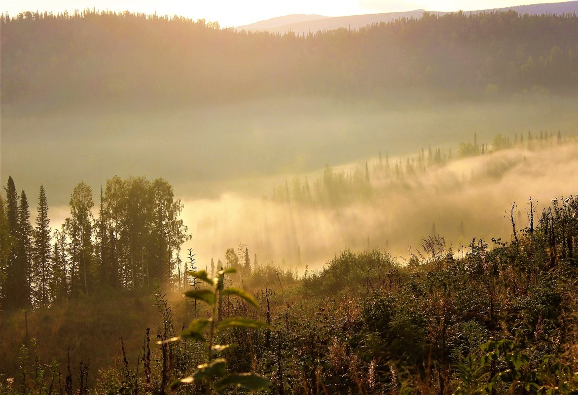 Солнце гонит туман - Сергей Чиняев