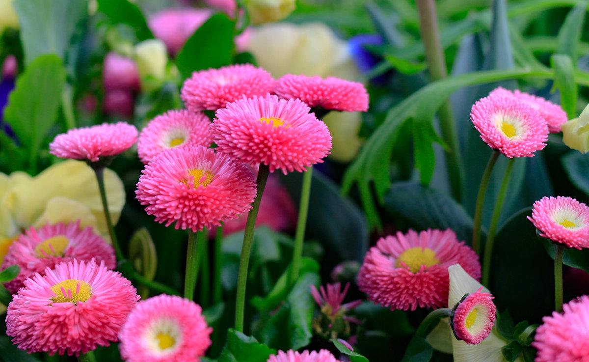 .....к сожалению не знаю названия этого цветка. - Ирина ...............