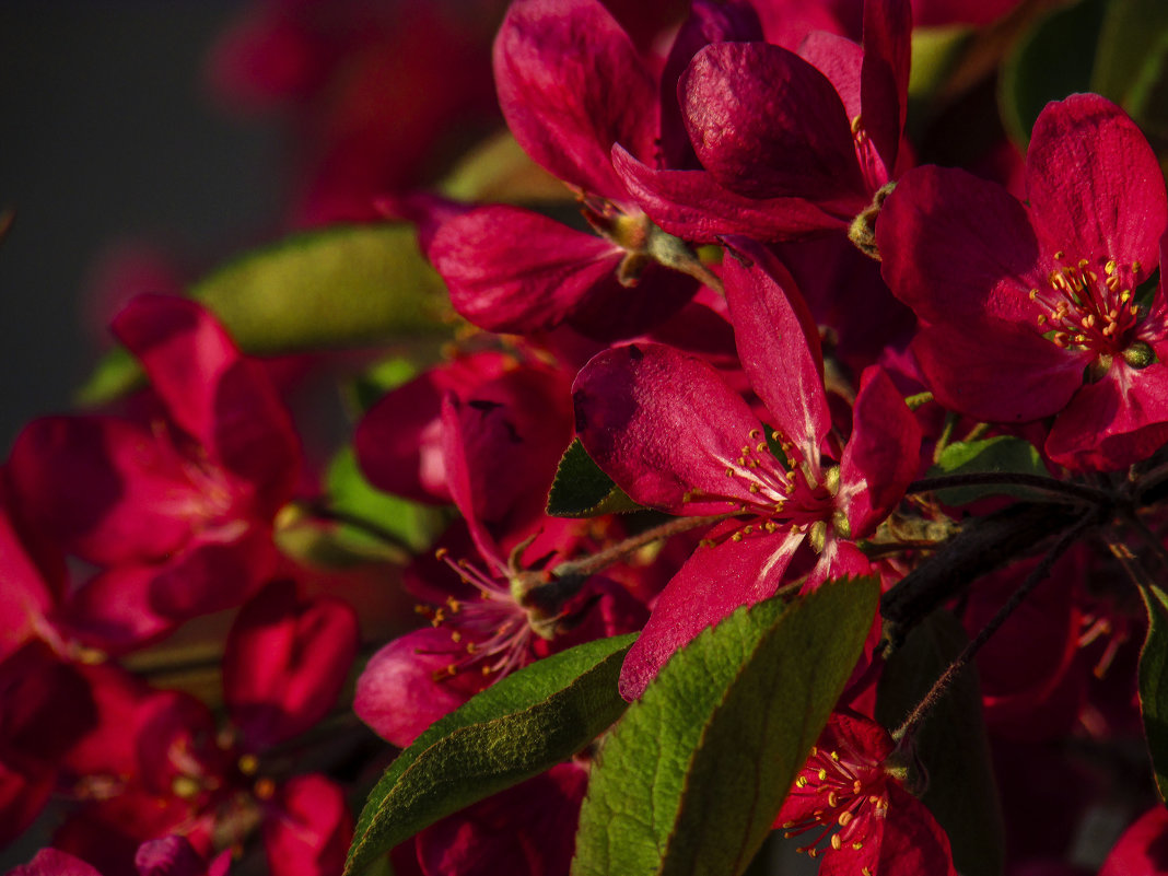 весна красна - Марина Ринкашикитока