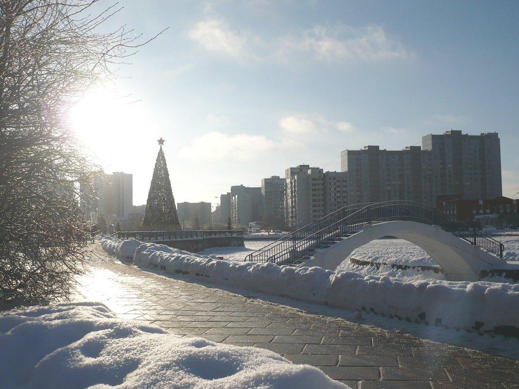 Редкое декабрьское солнце - Жанна Литуева