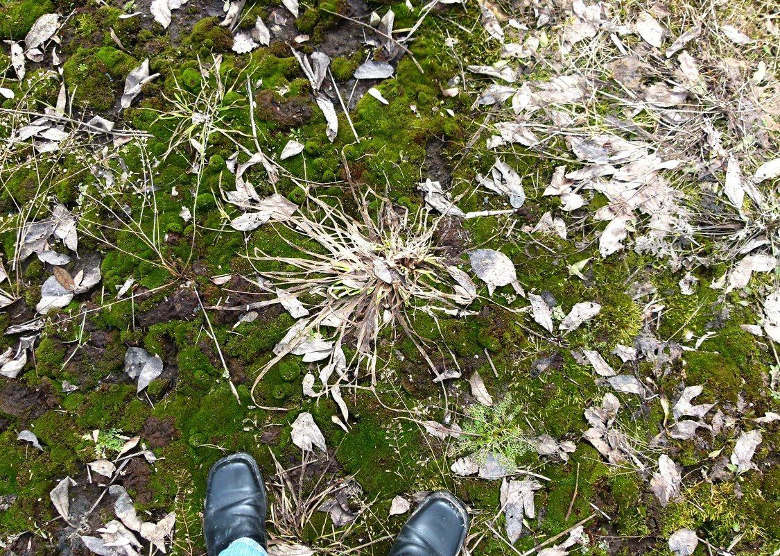 Геометрия листьев. - Марина Китаева