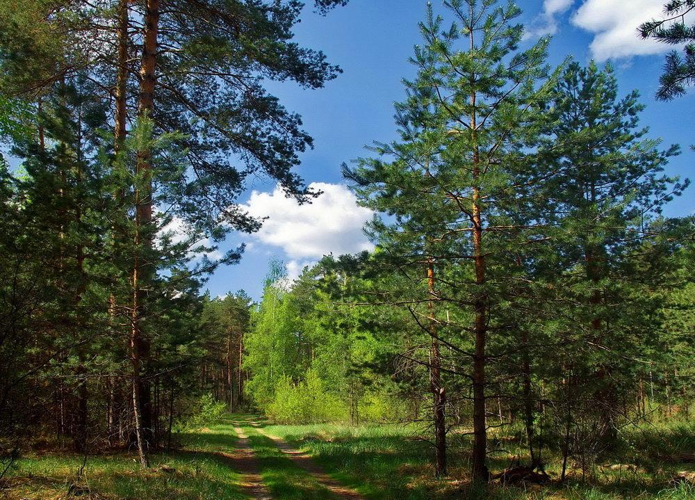 Весны лесные откровения... - Лесо-Вед (Баранов)