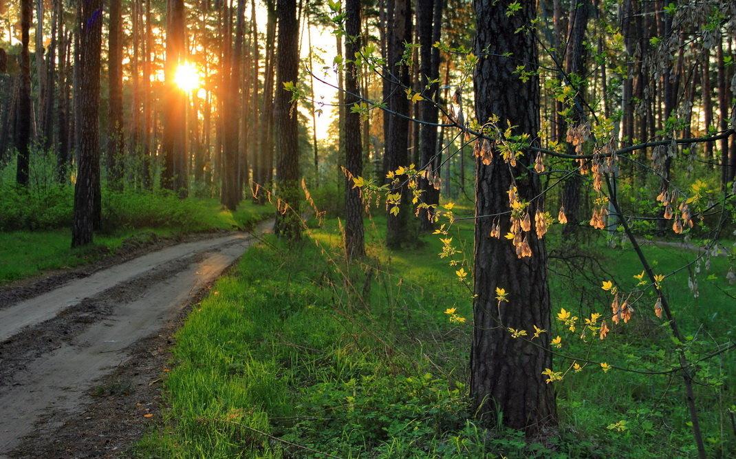 Вновь солнце вечностью мгновений... - Лесо-Вед (Баранов)