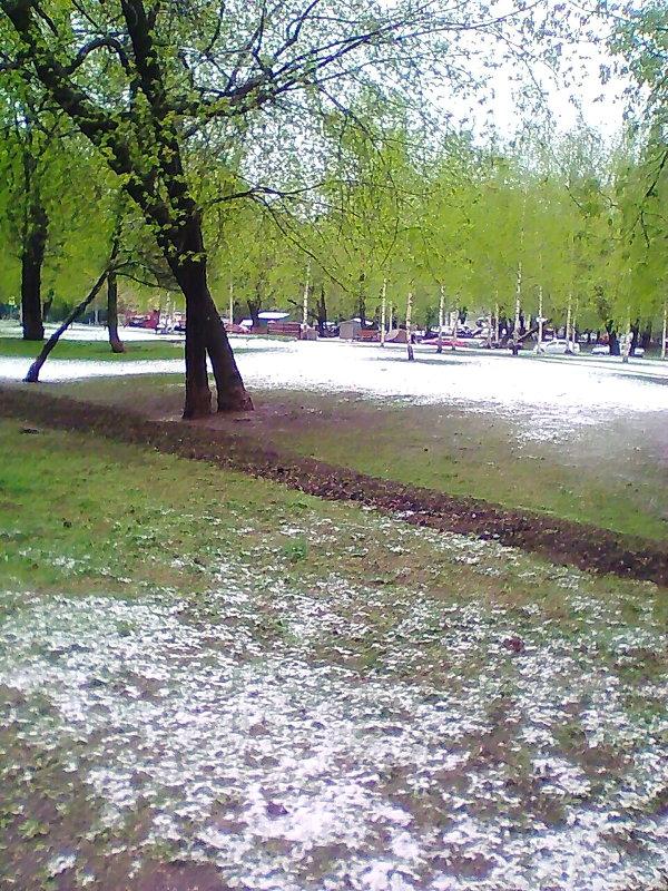Снег в мае) - Наталья Чернушкина