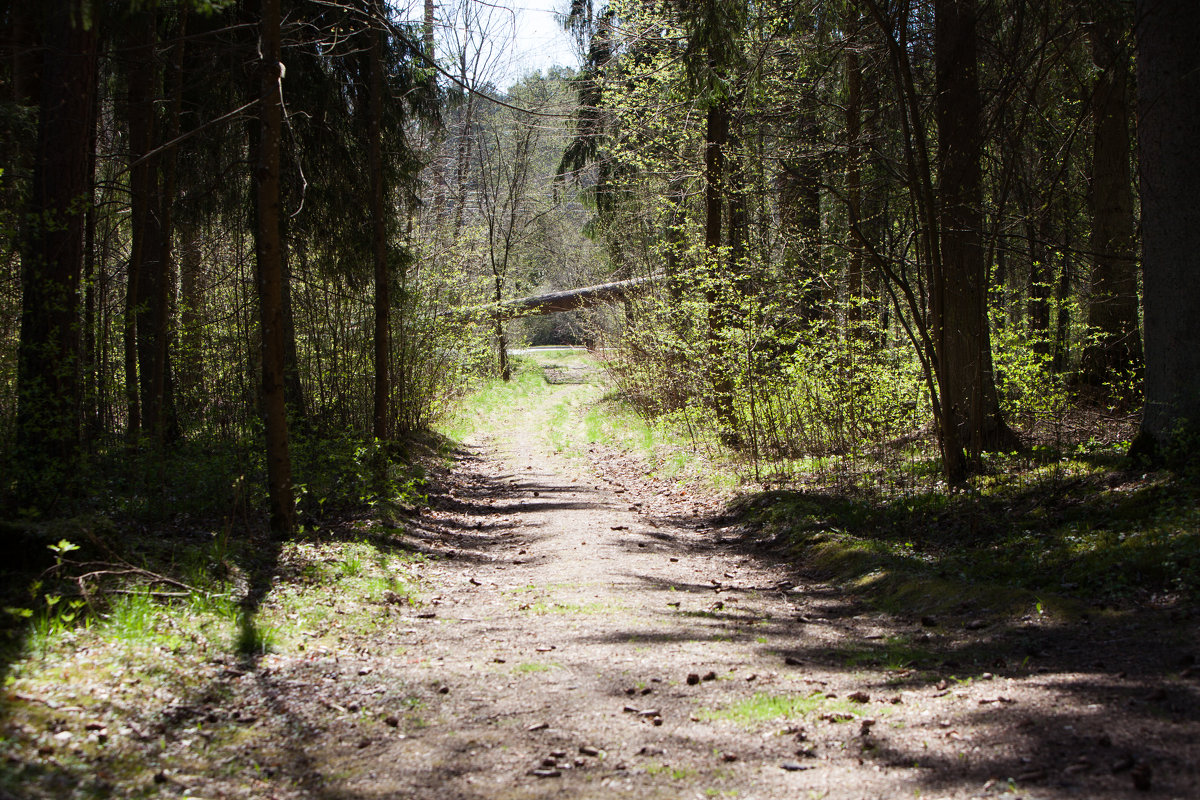 Лесная тропинка - Эммль Buturlin