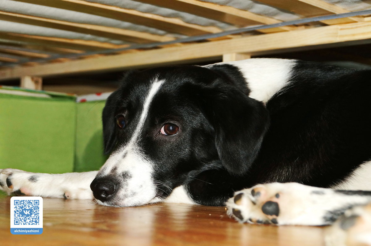 Собака Долька - Freewind