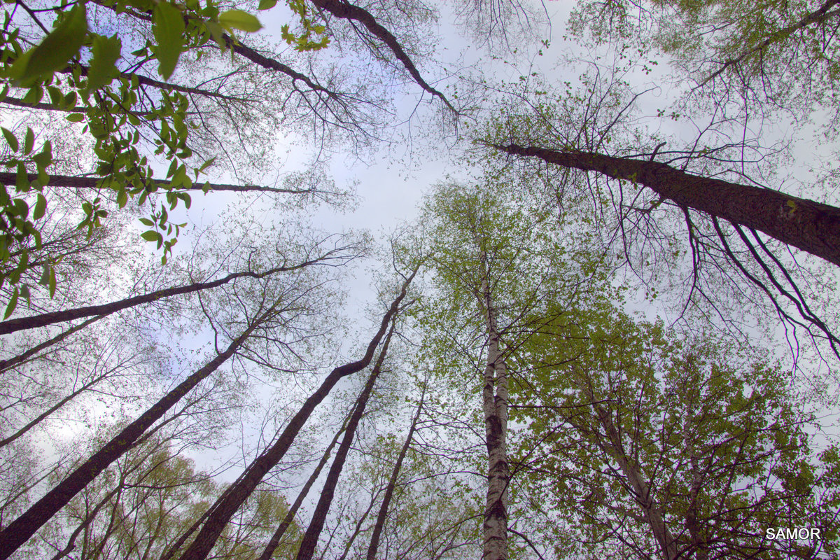 Небо - Валерий Самородов