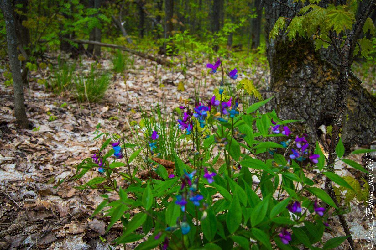 Весна в лесу - Мария Букина