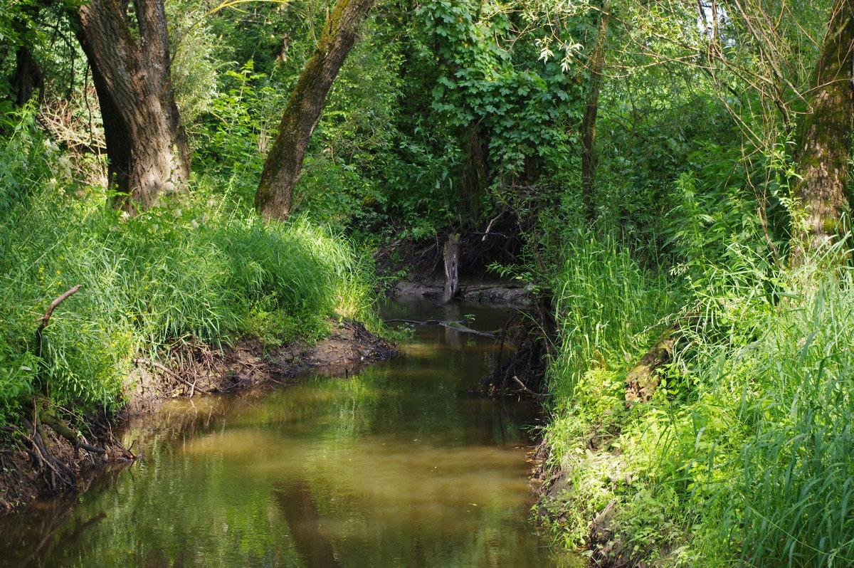 Лесной ручей. - Александр Атаулин