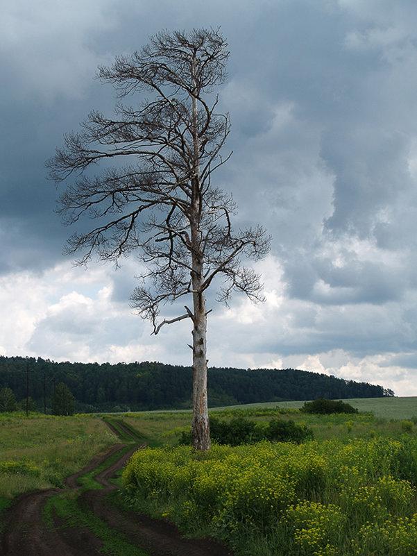 Одиночество - Oleg Svintszov