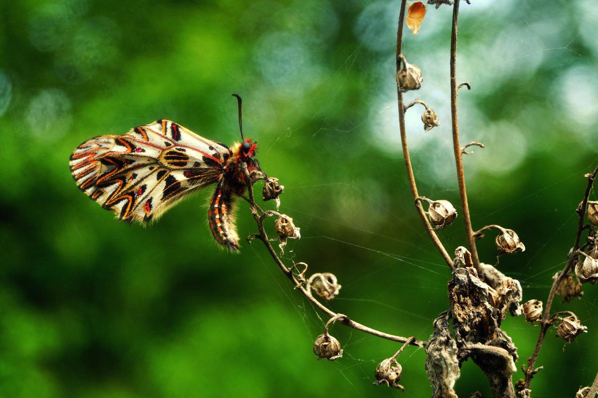 Бабочка - Кристина Юричковская