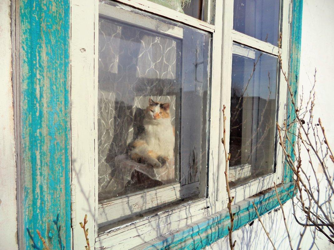 Кошка на окошке.. - Galina ✋ ✋✋