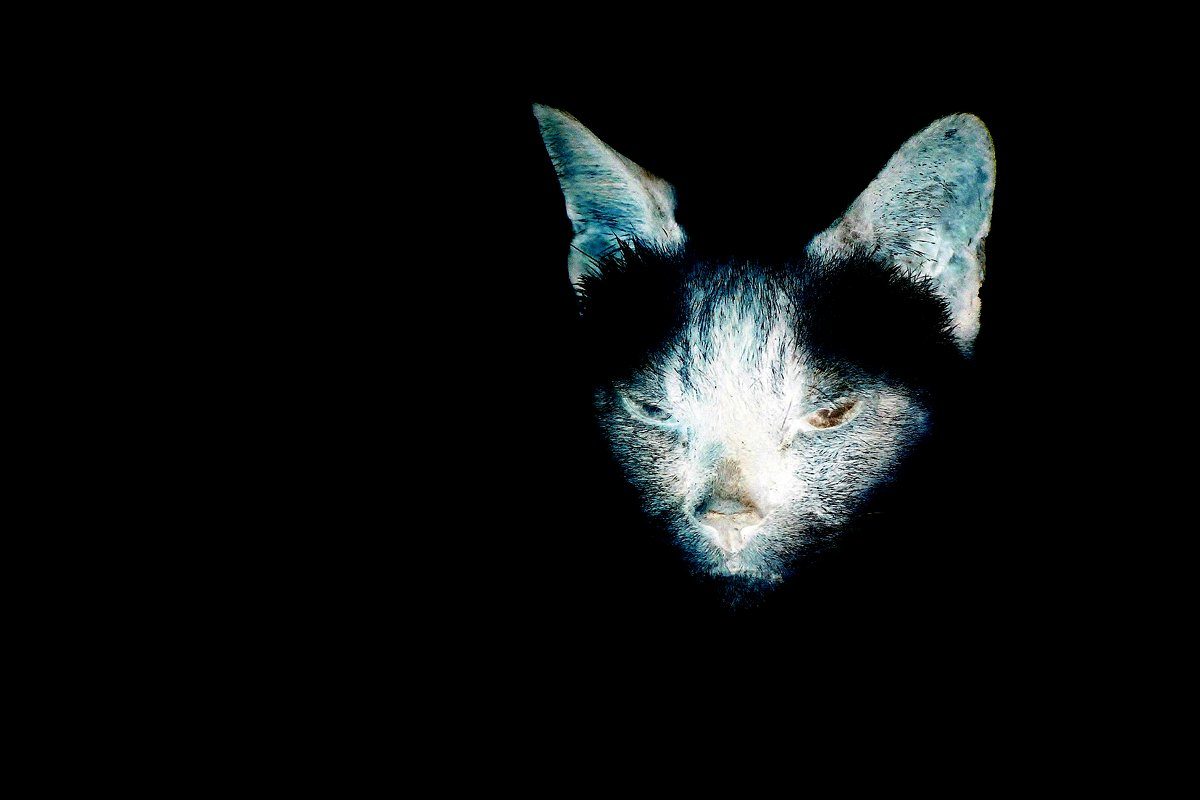 ЧернаЯ кошка,,,в темнОЙ комнате,,выхваченнаЯ ЗоркимЪ соколомЪ - Юный Пионер Одиннадцатый