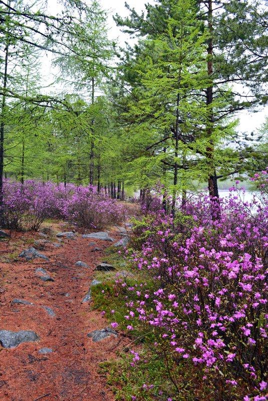 Сказочный лес прибайкалья - Ольга