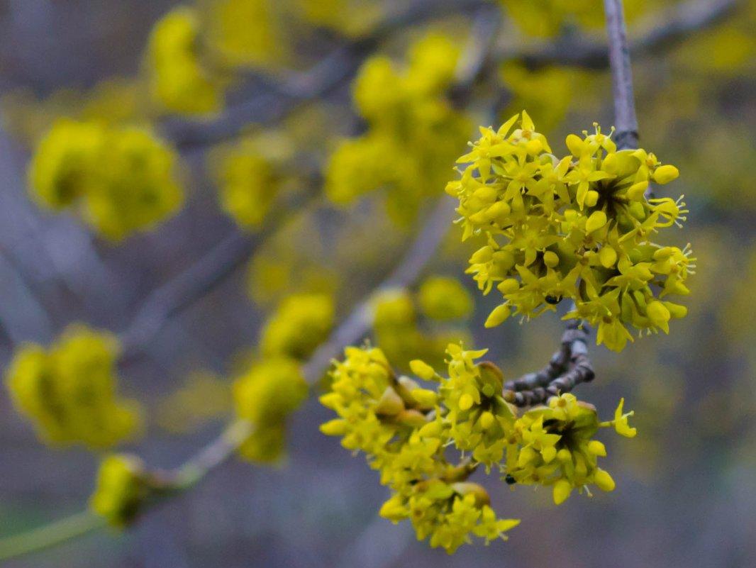 весна - Татьяна