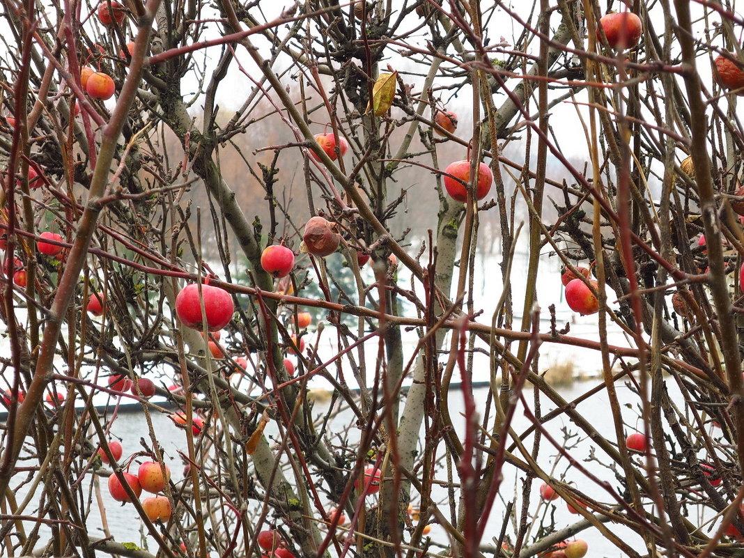 «Молодильные яблоки» - Сергей *Витебск*