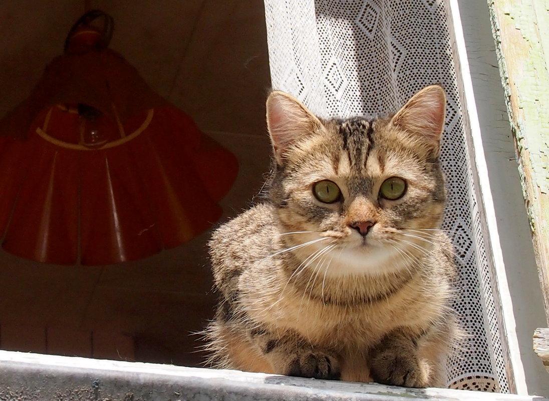 кошка в окошке - Александр Прокудин