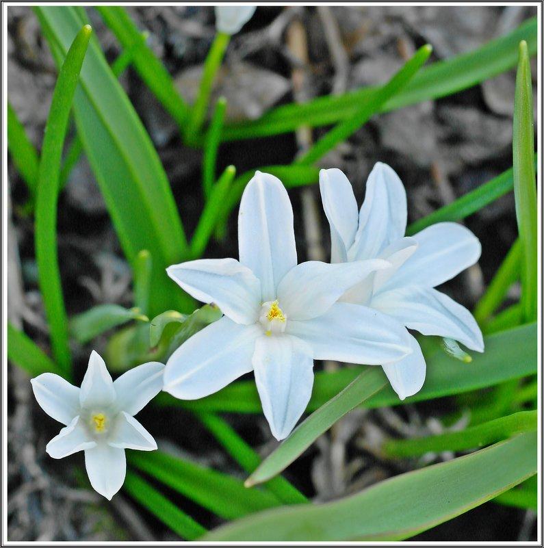 Мгновения весны * - muh5257