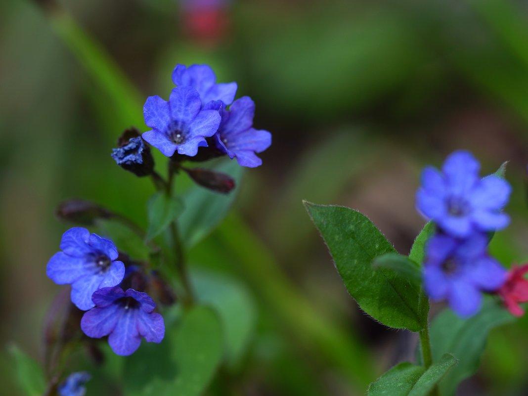 Первые цветы. - kvstu