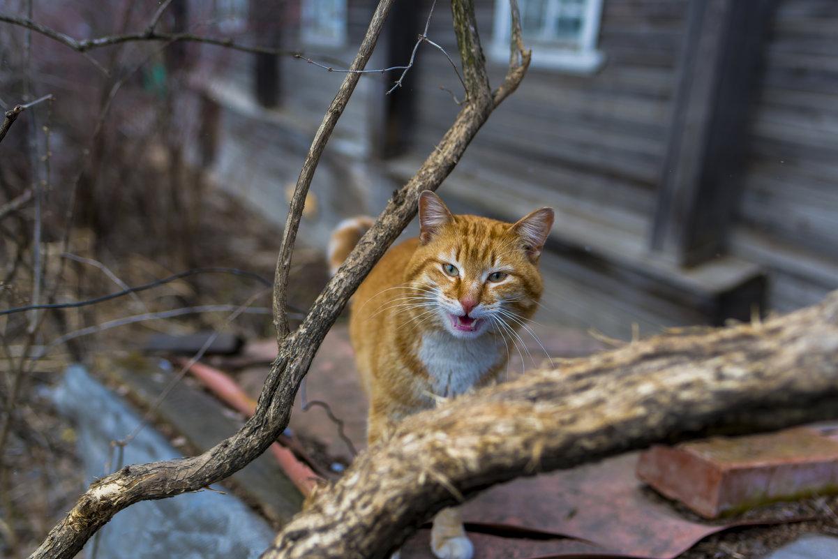 Мартовский кот - Владимир Логинов
