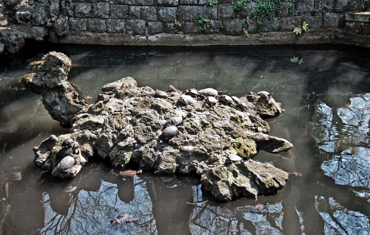 Черепахи на черепахе - Alexander Dementev