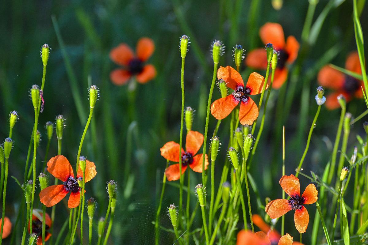 Полевые цветы - Valentina M.