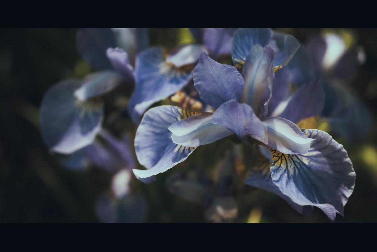 цветы - Gmm12345