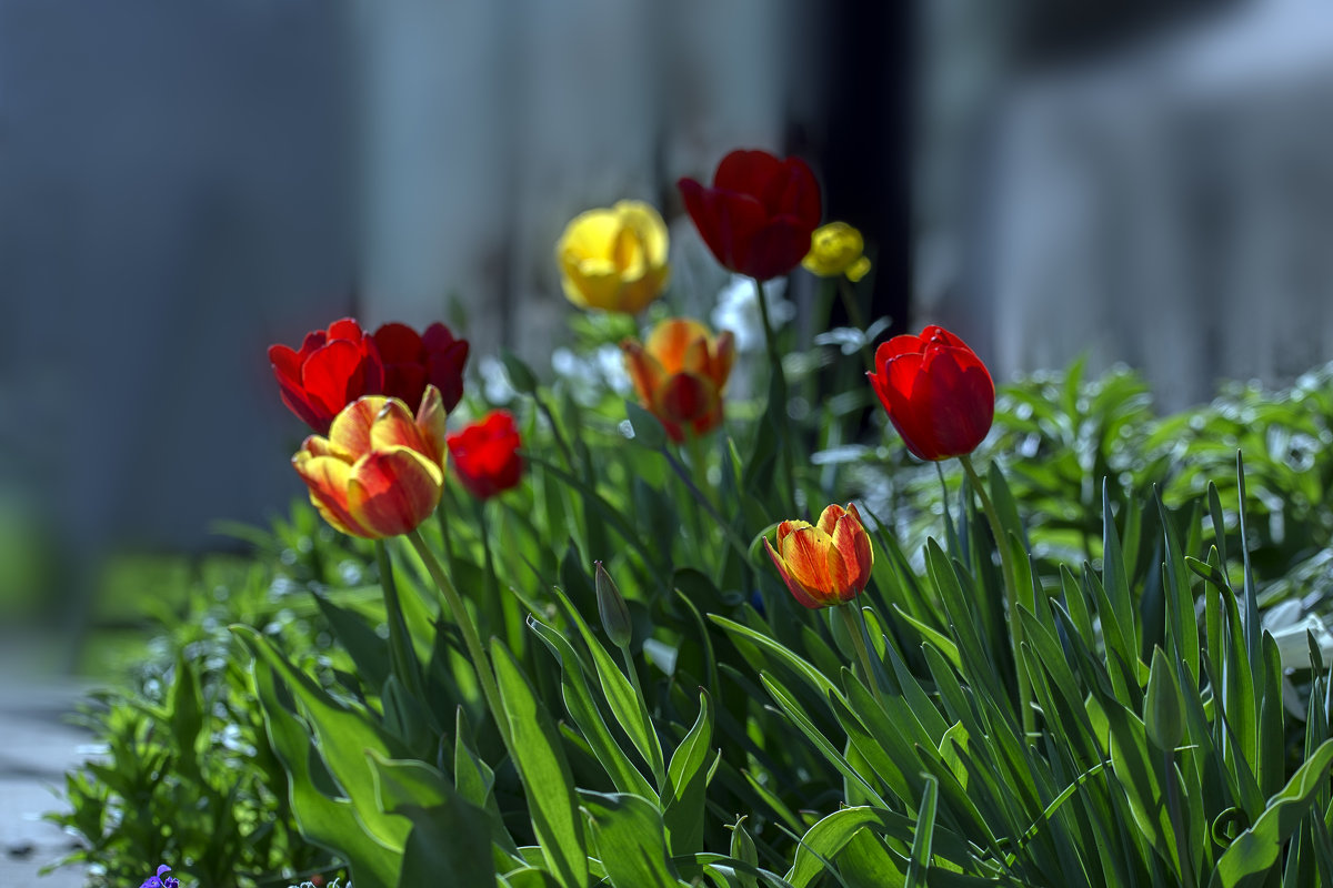 цветы весны - gribushko грибушко Николай