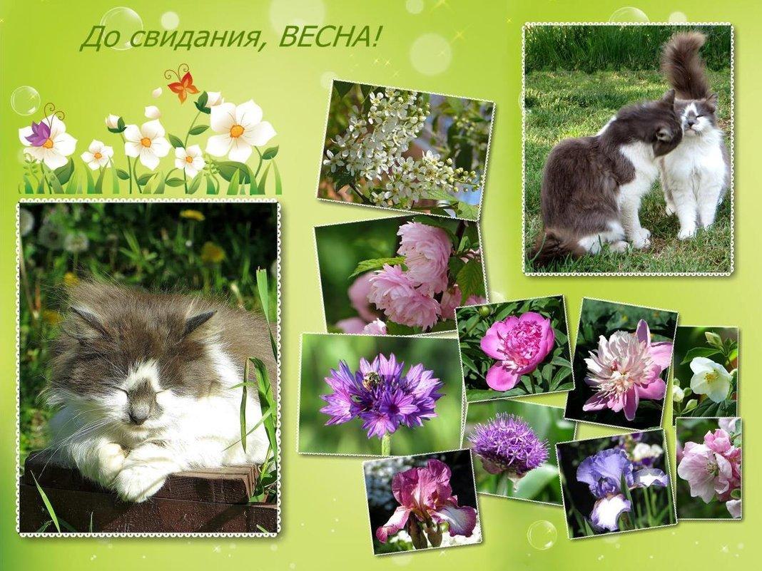 Не хочется расставаться с весной! - Татьяна Смоляниченко