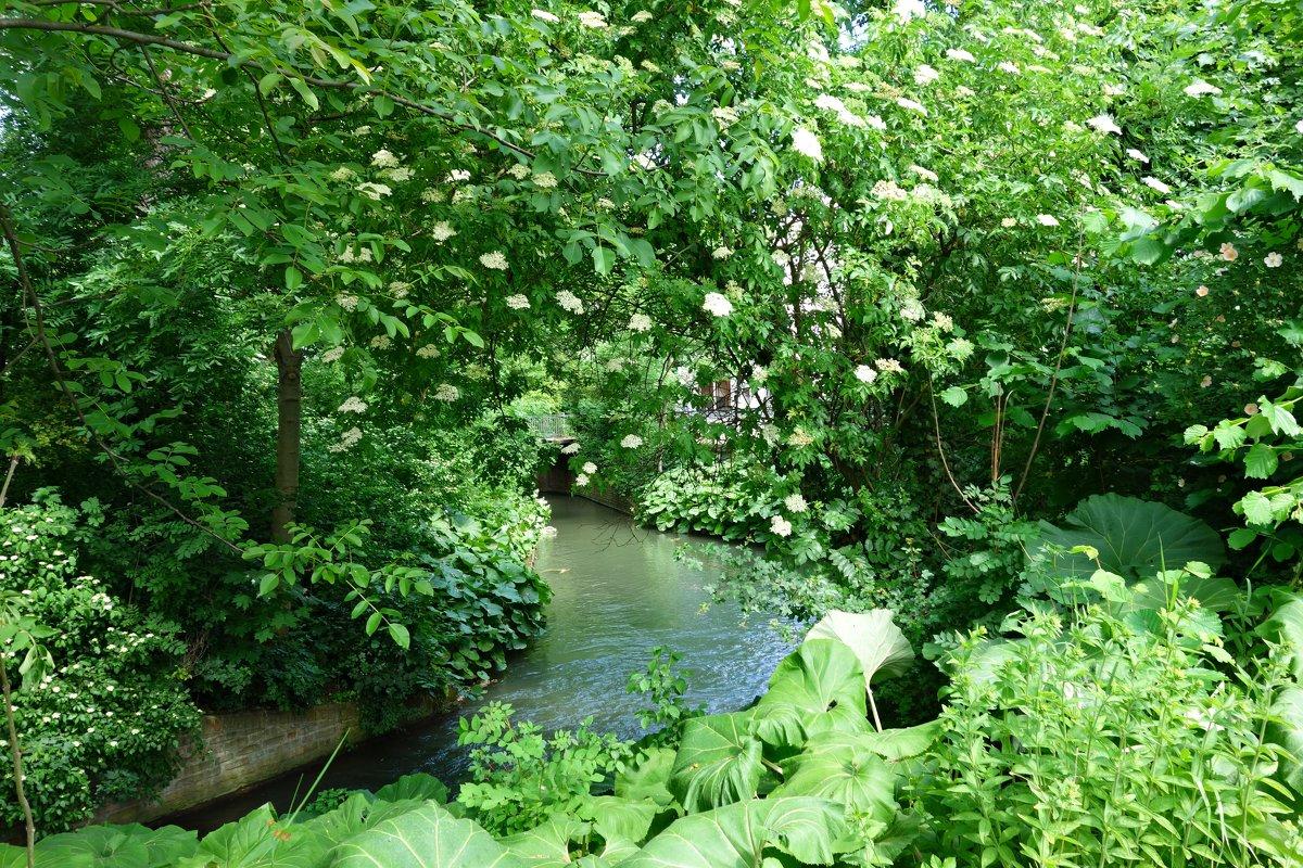 Зелёный май в городе... - Galina Dzubina