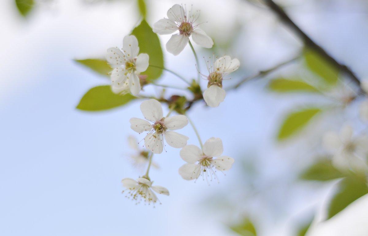 Весна... - Juliya Fokina