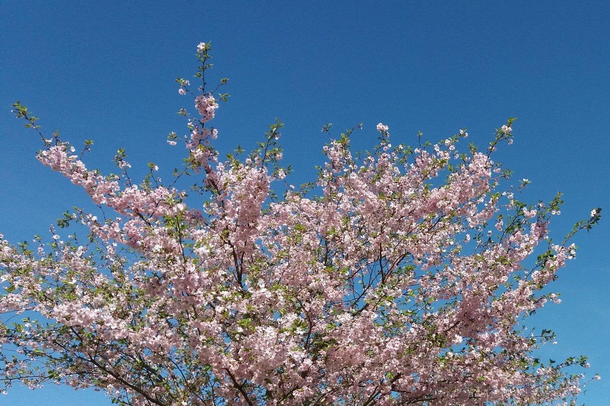 цветение - linnud