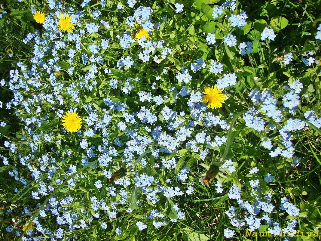 Сочетание желтого с голубым - Лидия (naum.lidiya)