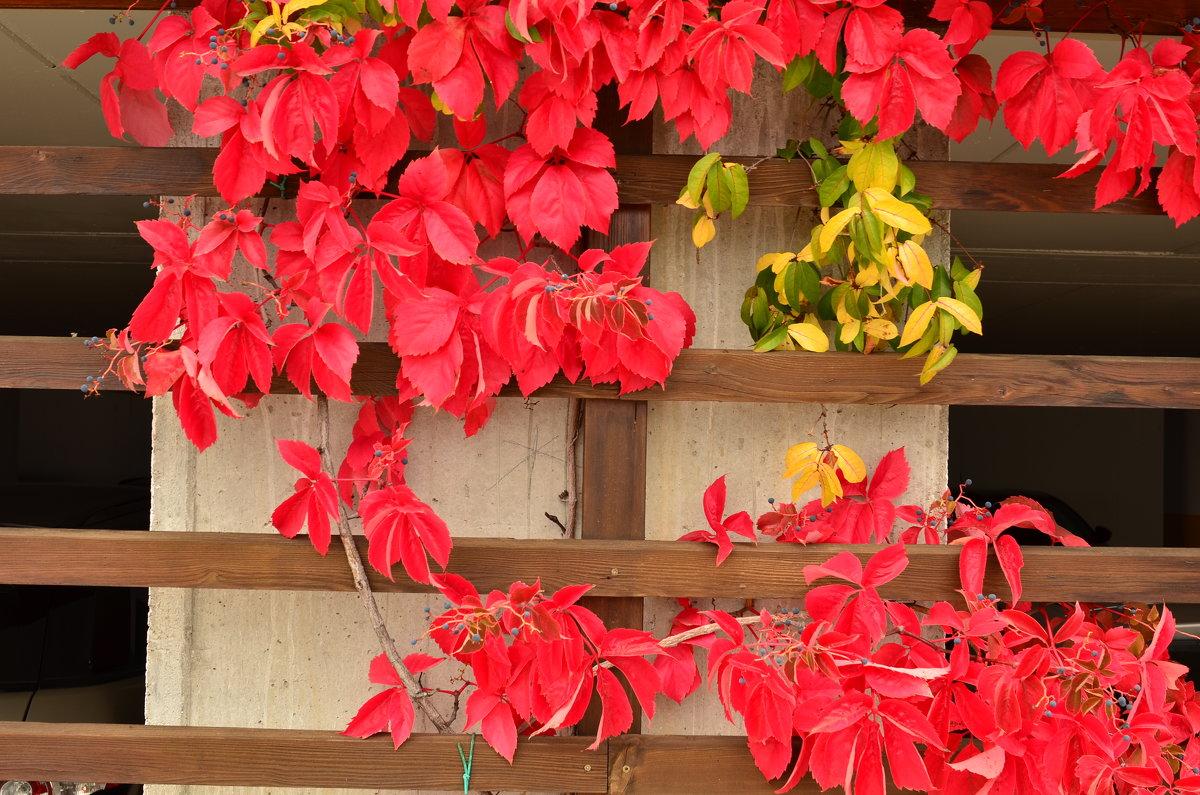 Багряные листья осени - Николай Танаев