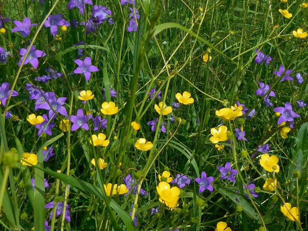 Луговые цветы - demyanikita