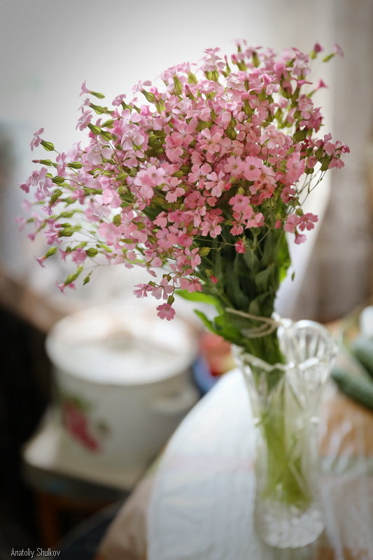 Цветики-цветочки - Анатолий Шулков