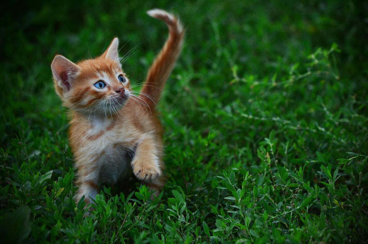 Отпрыск моего котейки... - Татьяна Евдокимова