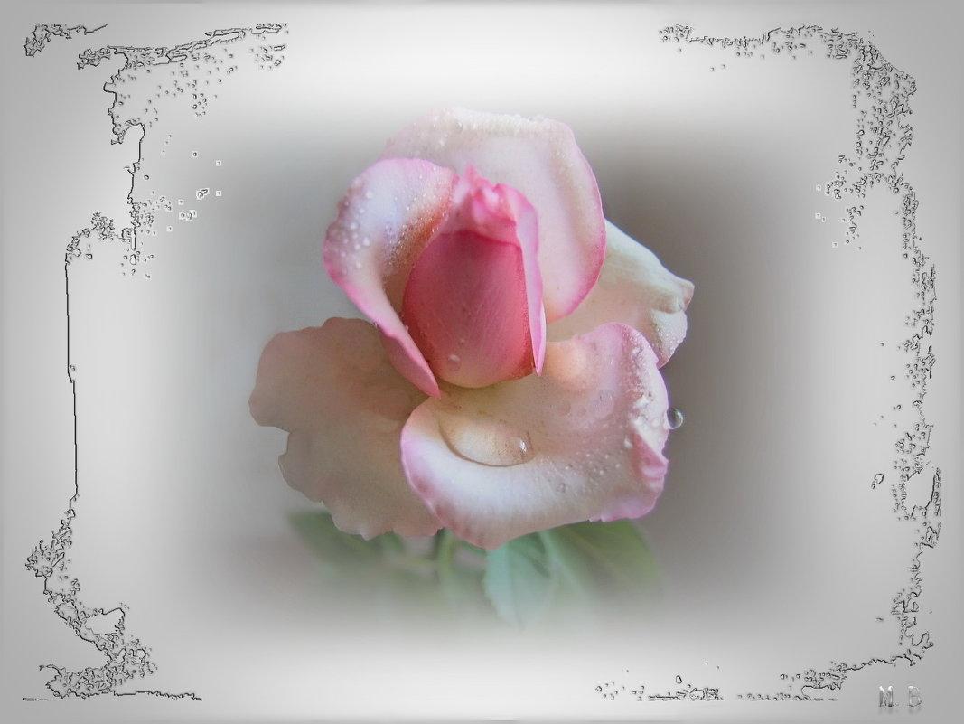 Цветёт диковинная роза... - Людмила Богданова (Скачко)