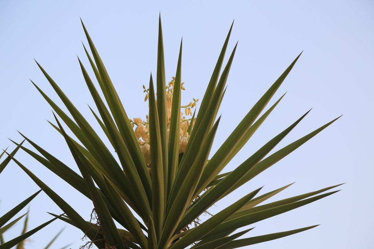 цветет пальма - Александра