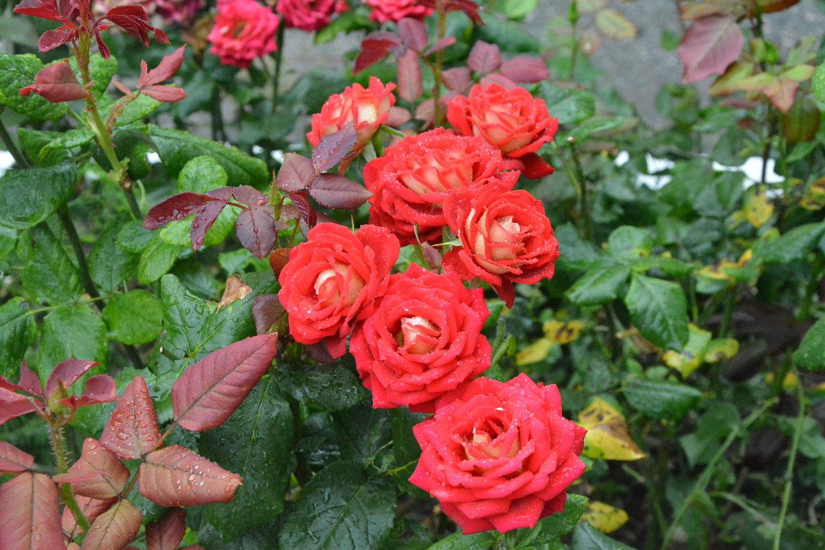 Семейка роз (2) - Александр Буянов