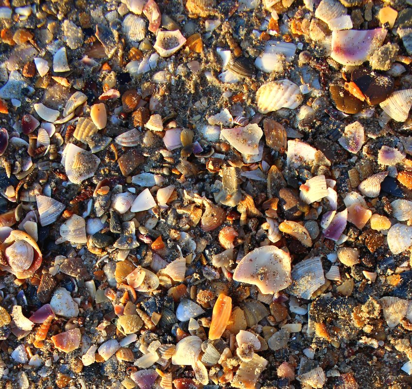 Ракушечки на песке. - Ольга Анх