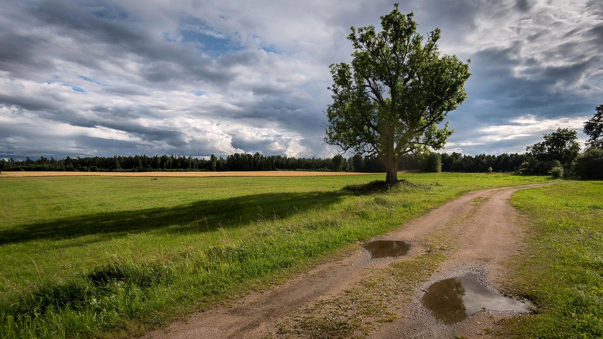 Дерево. - Dmitry D