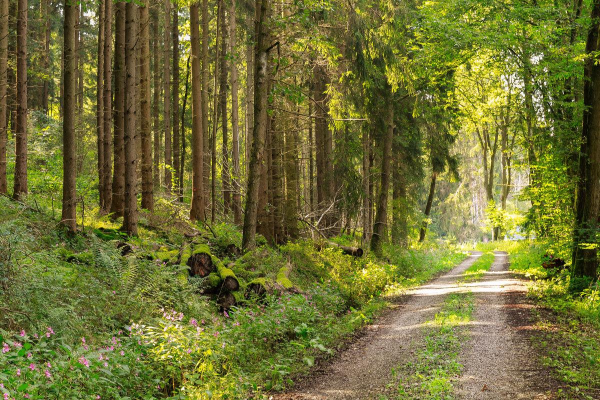 Прогулка по лесу. - Ирина ...............