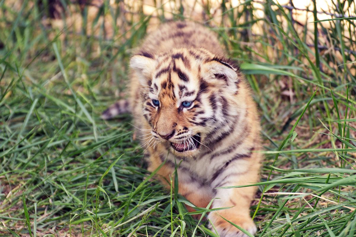 маленький хищник - Сергей