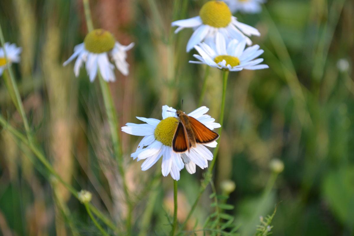 Бабочка - Валерия