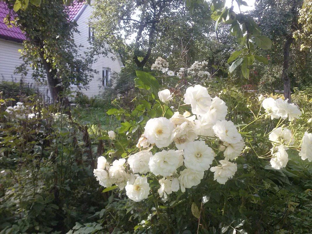 Rugsėjis sode / September in my garden - silvestras gaiziunas gaiziunas