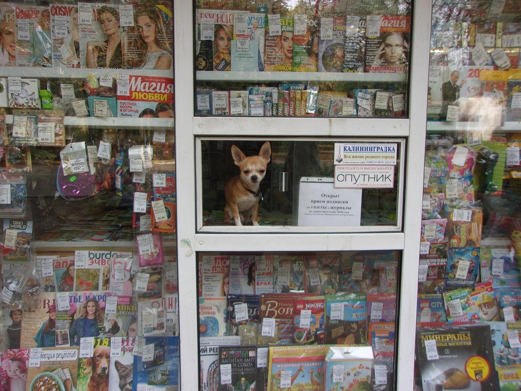 Продавец газет - елена