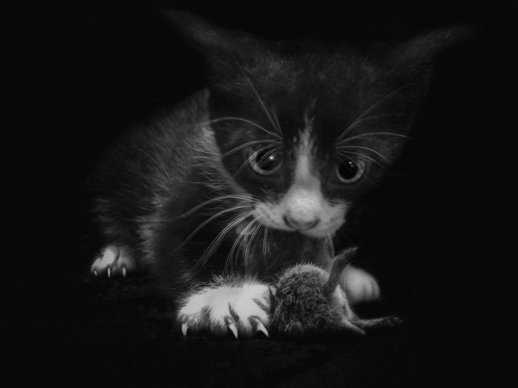 Кошки - мышки .... - Va-Dim ...